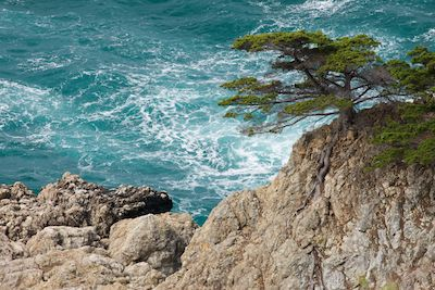 Image #20110407-106 Tree on rocky cliff with aqua blue ocean