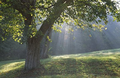 Image #6622 Morning sunlight streaming through trees