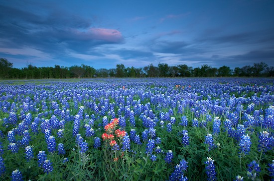 Byron Jorjorian Photography 187 Bluebonnet
