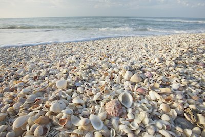 Shells on the beach Image #20120227-209