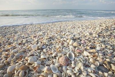 Shells on the beach Image #20120227-209