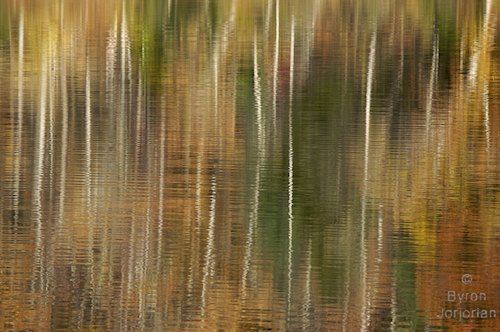 Silvanus Abstract of trees reflecting in the surface of a river in the fall Image # 110108-105