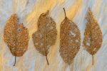 The Leaf Collection