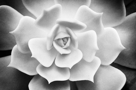 Art Fine Photography Byron Jorjorian